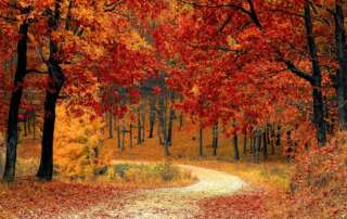 Autumn walk in nature